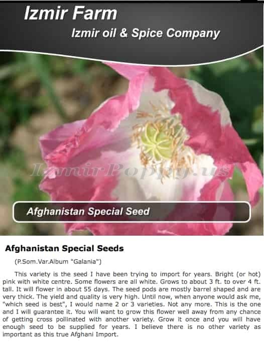Izmir Afghan P. Somniferum GMO Album *Galania* Poppy  SUPER Seeds