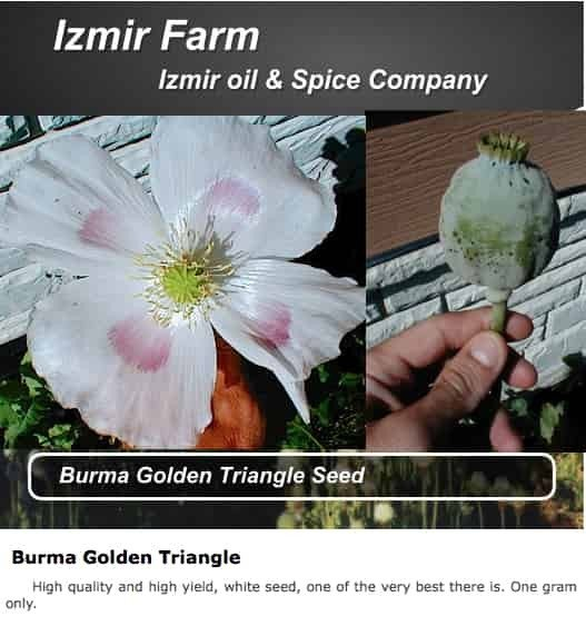 Izmir 'Burma Golden Triangle' Papaver Somniferum Poppy Seeds