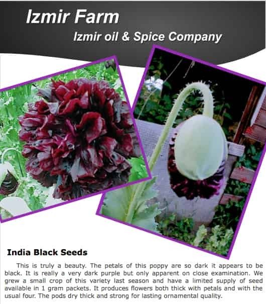 Izmir India Black PAPAVER SOMNIFERUM POPPY SEEDS