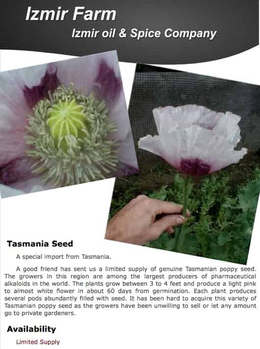 500 Izmir Tasmanian PAPAVER SOMNIFERUM POPPY SEEDS